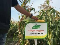 Сахарная кукуруза Джамала F1, S2-тип, 20000 семян, ТМ Мнагор