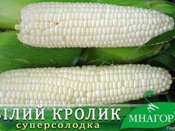 Сахарная кукуруза среднеспелая (78-80 дней), сахаров: 22%