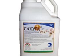 Сакура®, КС - надійний захист садів та виноградників