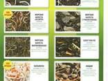 Салаты из морской капусты (ламинария) - фото 1