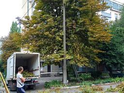 Санитарная Обрезка деревьев, аварийных сухих веток, садовник