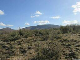 Саженцы можжевельник, Juniperus, Верес, съедобный, куст дере