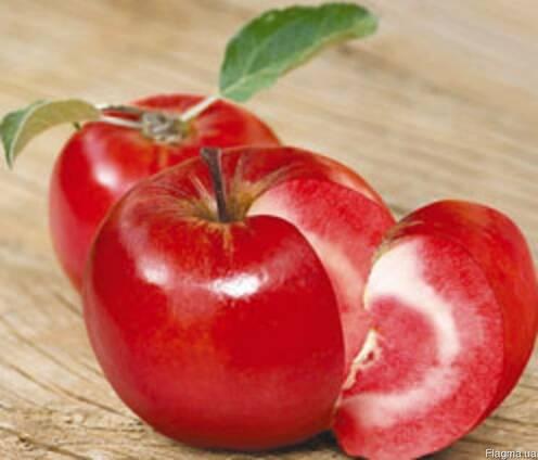Саженцы яблони Ера