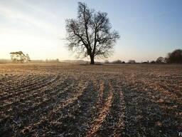 Сельхозпредприятие, агрофирму, колхоз
