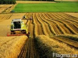 Сельхозпредприятия с землей в обработке