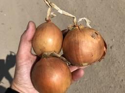 Sell fresh onions