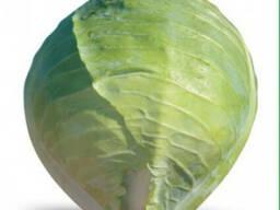 Семена белокочанной капусты Hitomi F1 / Хитоми F1