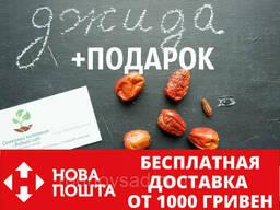 Семена Джиды бухарской (10 штук) для саженцев, финик. ..