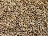 Семена эспарцета (песчаный) - фото 1