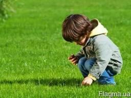 Семена газонной травы DLF Trifolium.