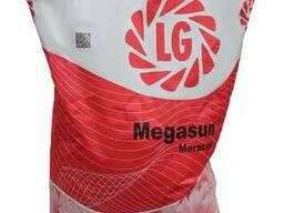 Семена гибрида подсолнечника Мегасан от Лимагрейн (Limagrain