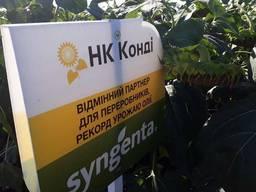 Семена гибрида подсолнечника НК Конди Сингента оригинал