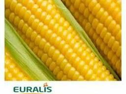 Семена гибридов кукурузы Евралис Семанс (Euralis Semences)
