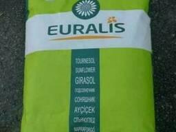 Семена гибридов Подсолнечника и Кукурузы