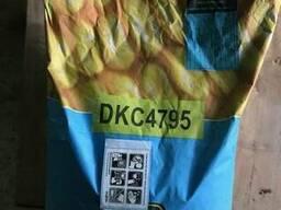 Семена гибриды ДКС 4795 (DKC4795)