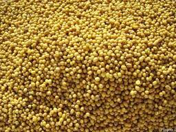 Семена горчица белая \ желтая