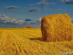 Семена кормовых трав от 100 кг. Большой выбор.