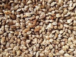 Семена кормовых трав от 5 кг