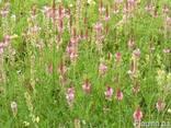 Семена кормовых трав от 5 кг. - фото 1