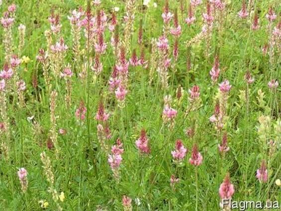 Семена кормовых трав от 5 кг.