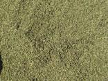 Семена крапивы - фото 1