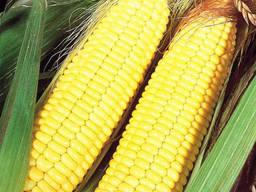 Семена кукурузы Афина