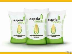 Семена кукурузы Асприя Сиидз \Aspria Seeds