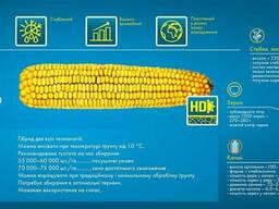 Семена кукурузы DKC 3511 ( ДКC 3511)Монсанто