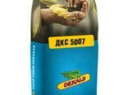 Семена кукурузы ДКС 5007 (Мonsanto)