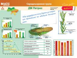 Семена кукурузы Дм Петрос 260