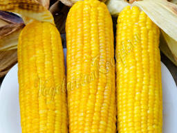 Семена кукурузы ДН Аквозор (ФАО 320)