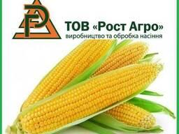Семена кукурузы Галатея, Хотин, Аджамка, Рубин (Рост Агро)