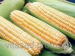 Семена кукурузы Хмельницкий. цена 16грн/кг.
