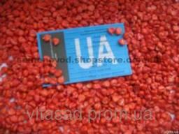 Семена кукурузы Любава 279 МВ цена 14грн/кг.