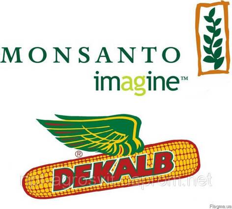 Семена кукурузы Монсанто (Monsanto)
