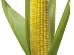Семена кукурузы Монсанто,Пионер,Сингента (оригинал).