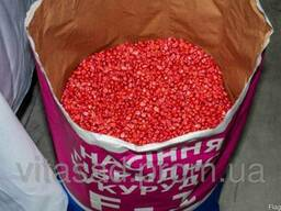 Семена кукурузы Оржица 237 МВ F1 цена 20грн/кг
