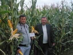 Семена кукурузы Оржица, Пивиха, Моника, Солонянский,