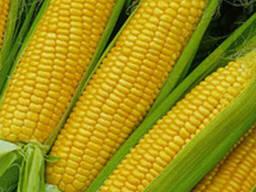 Семена кукурузы ПР38А79