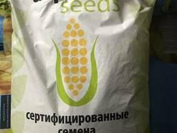 Семена кукурузы ПАН 200, ПАН 201 (Aspria) F1