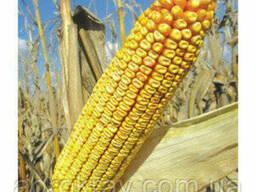Семена кукурузы Pioneer PR38N86 пионер