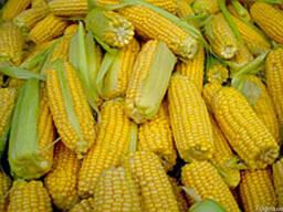 Семена кукурузы ПР39Г83