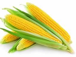 Сертифицированные Семена Кукурузы F1 Доставка