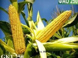 Семена кукурузы Венгерской селекции ГКТ 250 (ФАО 250)