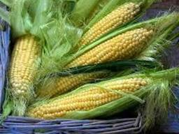 Семена кукурузы Внис, Маис, Рост-агро, G Host, Solar seeds