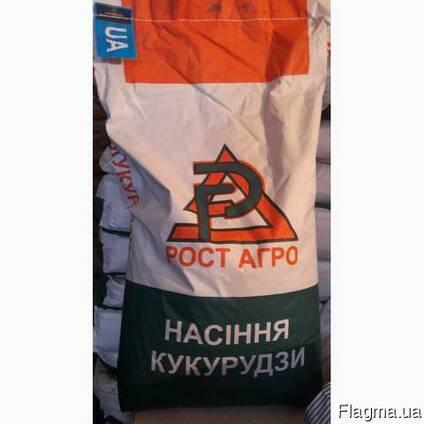 Семена кукузуры РостАгро - Галатея, Хотин, Збруч, Кремень