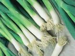 Семена Лук Батун - фото 4