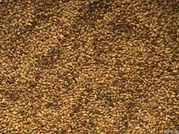 Семена Люцерны, Клевера, Фацелии оптом!