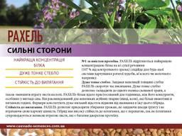 Семена люцерны Рахель (Caussade Semanses) Франция