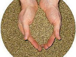 Семена люцерны сорт Надежда - фото 2